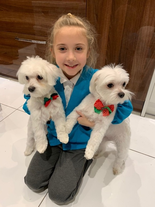 Gorgeous KC Champion Maltese Puppies available for